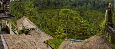 Groene terrasvormige padievelden in Bali Stock Afbeelding
