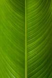 Groene textuur Stock Afbeelding