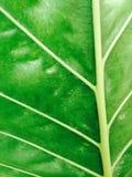 Groene textuur en achtergrond Royalty-vrije Stock Foto's