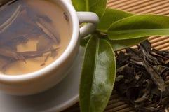 Groene thee Stock Afbeeldingen