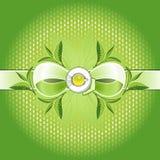Groene thee absolut samenstelling Stock Foto