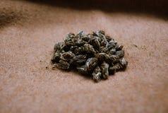 Groene thee met jasmijn Royalty-vrije Stock Foto's