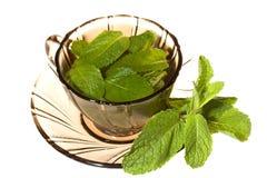 Groene thee met munt stock foto