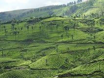 Groene theeaanplantingen met toneellandschappen Stock Afbeeldingen