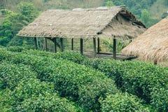 Groene theegebied en bamboehut Stock Afbeeldingen