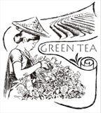 Groene theeillustratie Stock Afbeelding