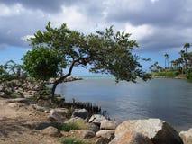 Groene theetribune eenzaam door het meer Royalty-vrije Stock Afbeelding