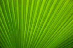 Groene tropische bladclose-up Stock Afbeeldingen