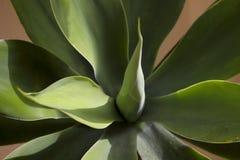 Groene tropische bladeren op een zonnige dag Achtergrond, bebouwd horizontaal schot, beschikbare ruimte voor tekst, zijaanzicht,  royalty-vrije stock afbeelding