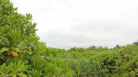 Groene tropische wildernis stock video