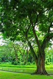Groene tuin Stock Afbeeldingen