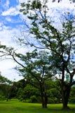 Groene tuin Stock Fotografie