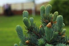 Groene tuin bij mijn platteland Ik houd van het Royalty-vrije Stock Afbeeldingen