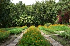 Groene tuin en gele bloemen royalty-vrije stock foto's