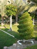 Groene tuin met mooi bomen en holengras Stock Foto