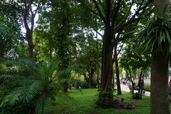 Groene tuin in Saigon Stock Fotografie
