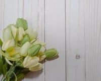 Groene tulp met een witte achtergrond Stock Afbeelding