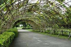 Groene tunnel Stock Fotografie