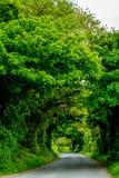 Groene tunnel, Ierland Royalty-vrije Stock Foto's