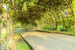 Groene tunnel in Suan Luang RAMA IX royalty-vrije stock afbeeldingen