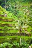 Groene Ubud Royalty-vrije Stock Foto