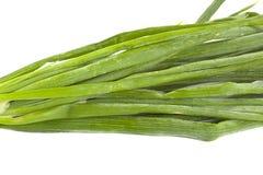 Groene ui Stock Afbeeldingen
