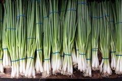 Groene uien Stock Foto