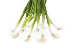 Groene Uien op Witte Achtergrond Stock Foto