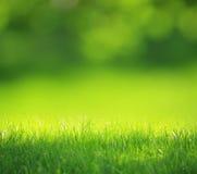 Groene vage achtergrond Royalty-vrije Stock Afbeeldingen