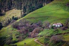 Groene vallei stock foto