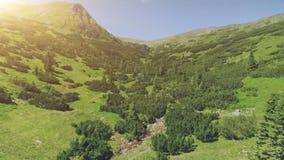 Groene vallei met het bos en de kromme van de pijnboomboom rive stock video