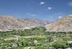 Groene valleioase bij woestijnbergen Stock Foto's