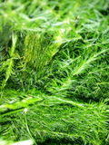Groene van aardbladeren muur als achtergrond Royalty-vrije Stock Afbeelding