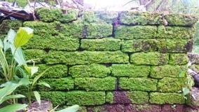 Groene van de achtergrond muuraard klimmerhibiscus stock fotografie