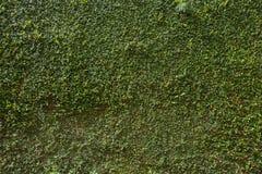 Groene van de de steenomheining van de bladklimop installatie behandelde de muurachtergrond stock afbeeldingen