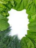 Groene van de de dillespinazie van de kadersla het groengreens royalty-vrije stock afbeeldingen