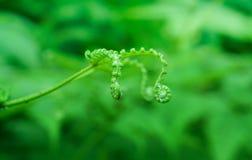 Groene varen in het bosbehang van de de lenteaard stock fotografie