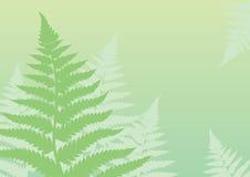 Groene varenachtergrond Vector Illustratie
