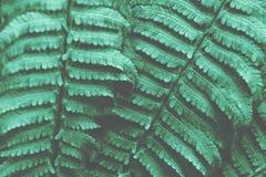 Groene varenbladeren stock foto's