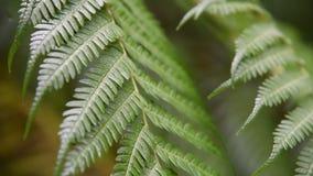 Groene varenbladeren met regendalingen in tropisch bos stock video