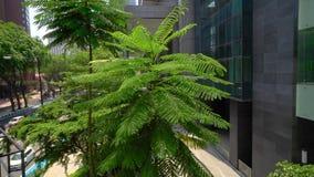 Groene varenboom dichtbij de bureaubouw, buitenkant Glasvensters op concrete voorgevel met groen boom en stadsverkeer stock footage