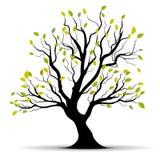Groene vectorboom over wit Stock Foto