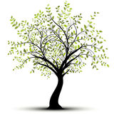 Groene vectorboom, witte achtergrond Royalty-vrije Stock Fotografie