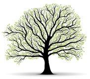 Groene vectorboompartij van bladeren, overzicht Royalty-vrije Stock Afbeelding