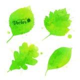 Groene vectordiebladeren in waterverfstijl worden geplaatst Stock Afbeelding