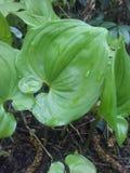 Groene vegetatie Royalty-vrije Stock Afbeelding