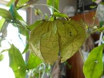 Groene vegetatie en een lantaarn royalty-vrije stock foto