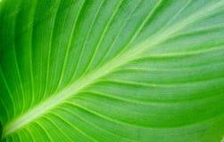 Groene verlofachtergrond Royalty-vrije Stock Foto