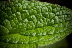 Groene verlofmacro stock foto's