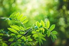 Groene verse bladeren op boom Stock Foto's